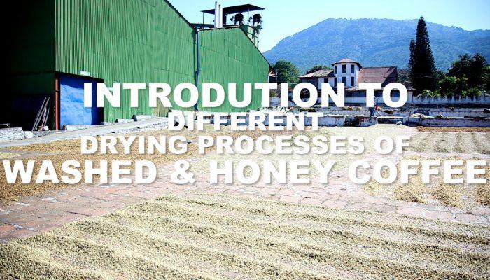 Honey Coffee Processing