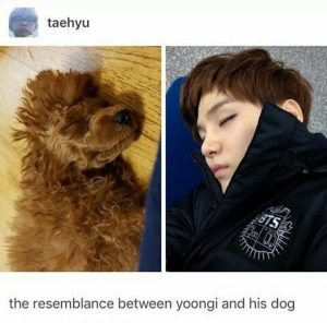 Suga, Holly. Min Holly, BTS, K-Pop, Pets