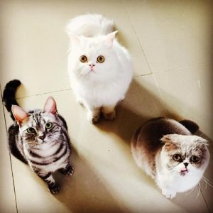 CL, Cats, Pudding, Snowball, Donut, K-Pop, Pets