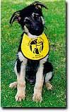 Guide Dogs 3