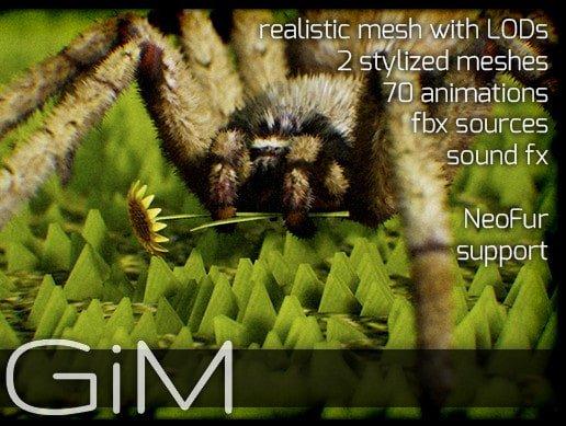 Animals Spider