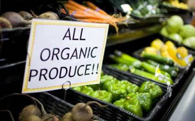 Denmark Intends To Be The World's FIRST 100% Organic Nation