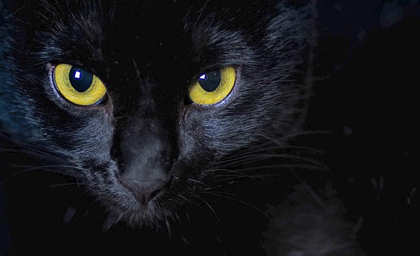 ¿Por qué utilizan animales en la brujería?