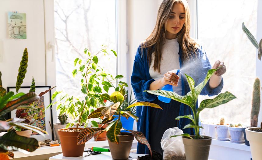 Conoce los beneficios de tener plantas en interiores