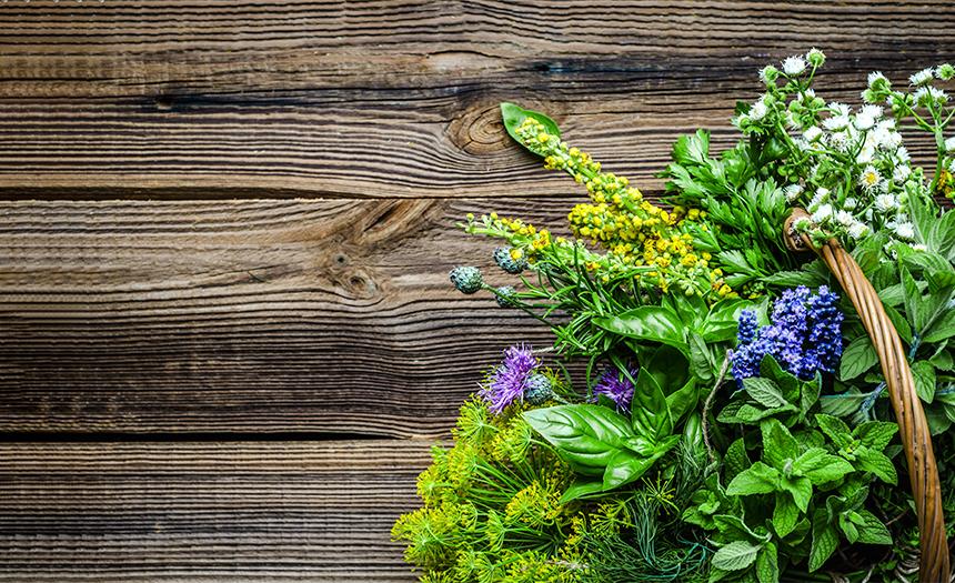 Flores comestibles: ¿cuáles son y cómo consumirlas?