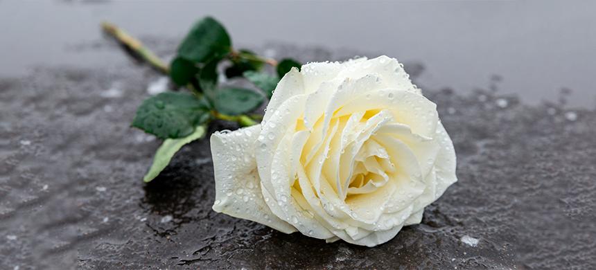 Viernes de Liberación Espiritual con la Rosa Blanca