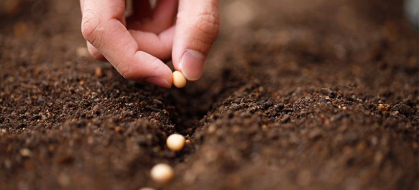 ¡Atención! Arranca esta semilla o cosecharás los frutos del fracaso