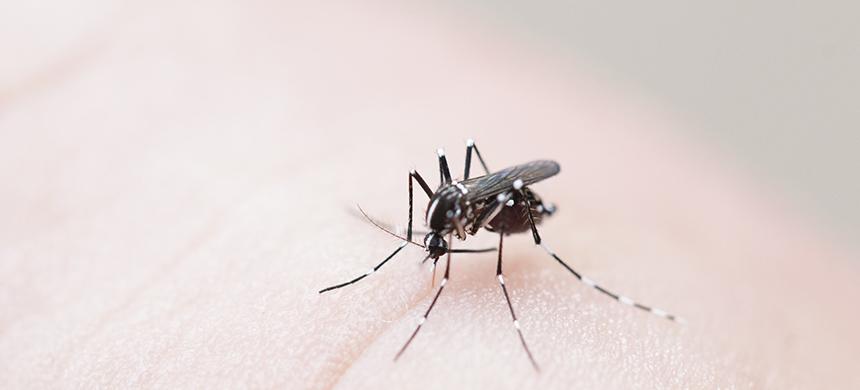 Lo que no sabes de la chikungunya