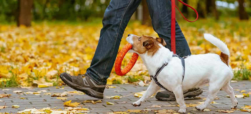 ¿Existe una ley que te obliga a sacar a tu perro con correa?