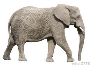elephant-5