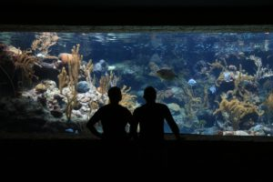 view of an aquarium window with two silhouetted figures in front