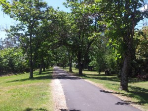 A tree-lined walkway with a wide grey path with a gravel edging. there is grass on either side.