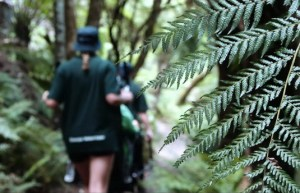 View of the back of a volunteer Sherpa wearing a dark green shirt and shorts pushing the special equipment in a ferny gully