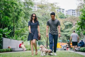 A young woman and man are walking their dog in an urban park.