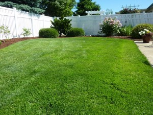 An expanse of green lawn in a suburban back yard.