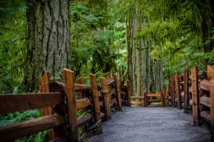 A path wanders through a dense woodland. It has a fence of heavy timbers on each side of the path. Canadian city parks go for inclusion.