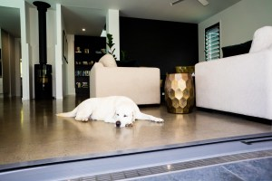 A white Labrador dog sleeps in front of level access to the alfresco. NSW said no.