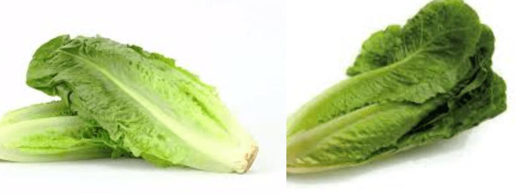 Brote de E. coli en las lechugas romanas desata una alerta nacional