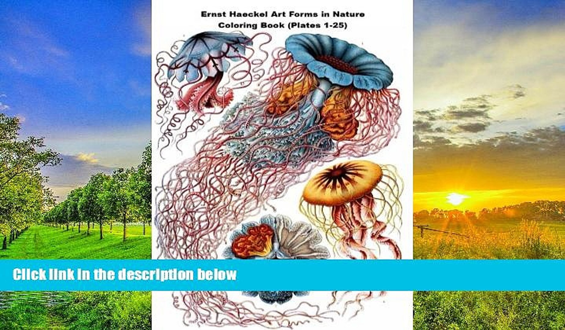Art Forms In Nature Ernst Haeckel Pdf