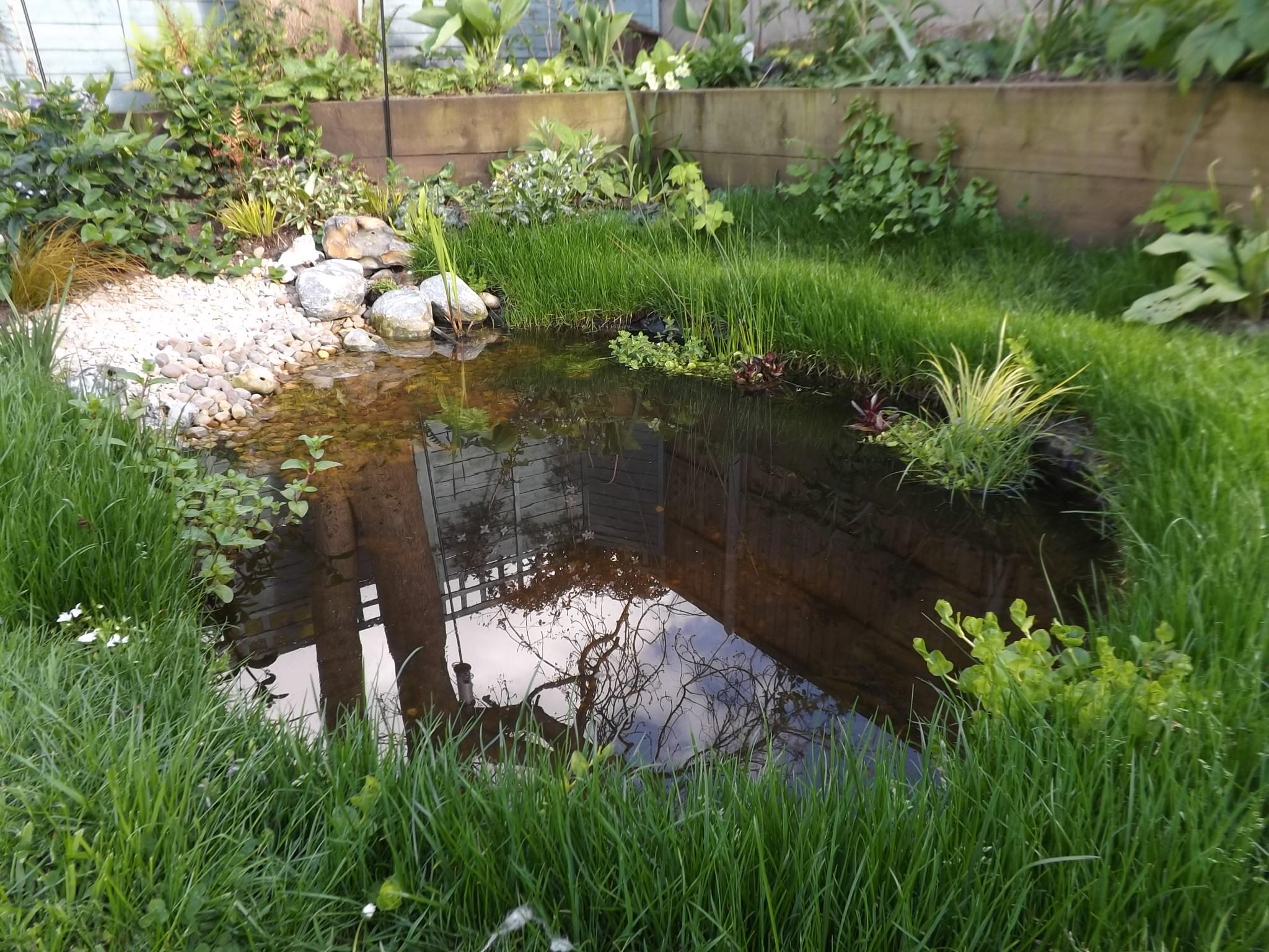 Pre Formed Pond Vs Liner