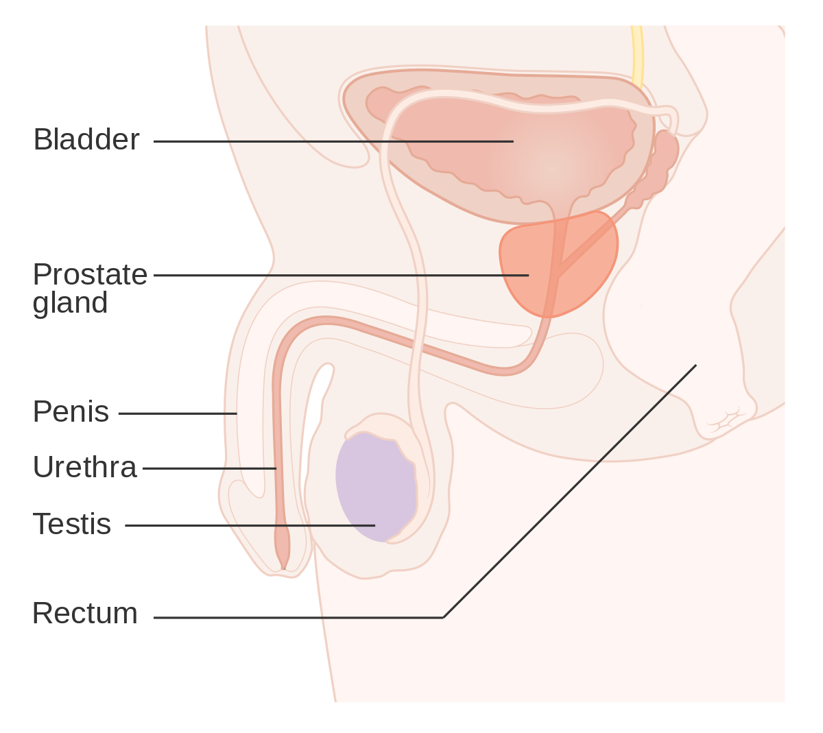 Treatment For Aggressive Form Of Prostate Cancer