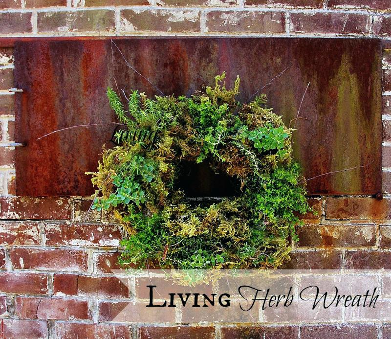 Where To Buy Living Wreath Forms