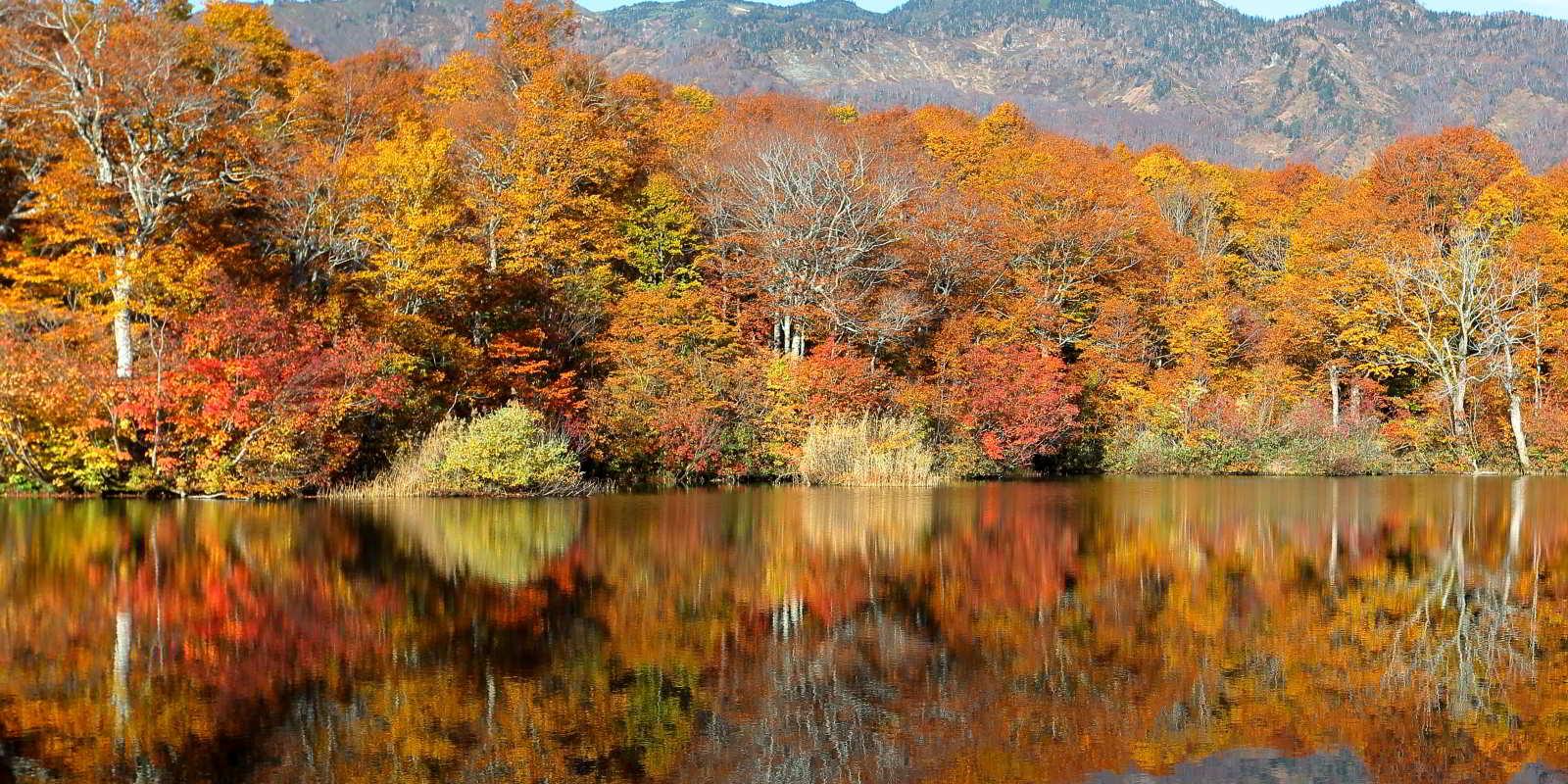 Konoike Pond Shinrin-yoku trail