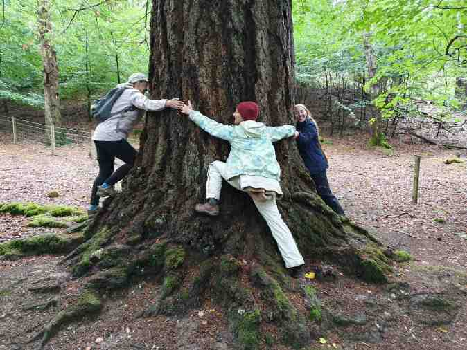Four person tree hug