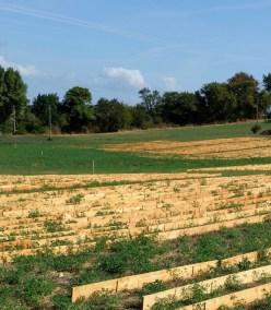universite-avenir-agro-environnement-maraichage-planches