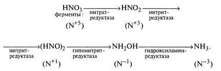 Превращение азота в растениях
