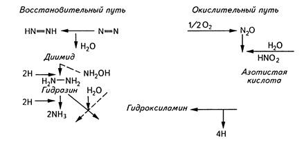 Гипотетическая схема превращения азота