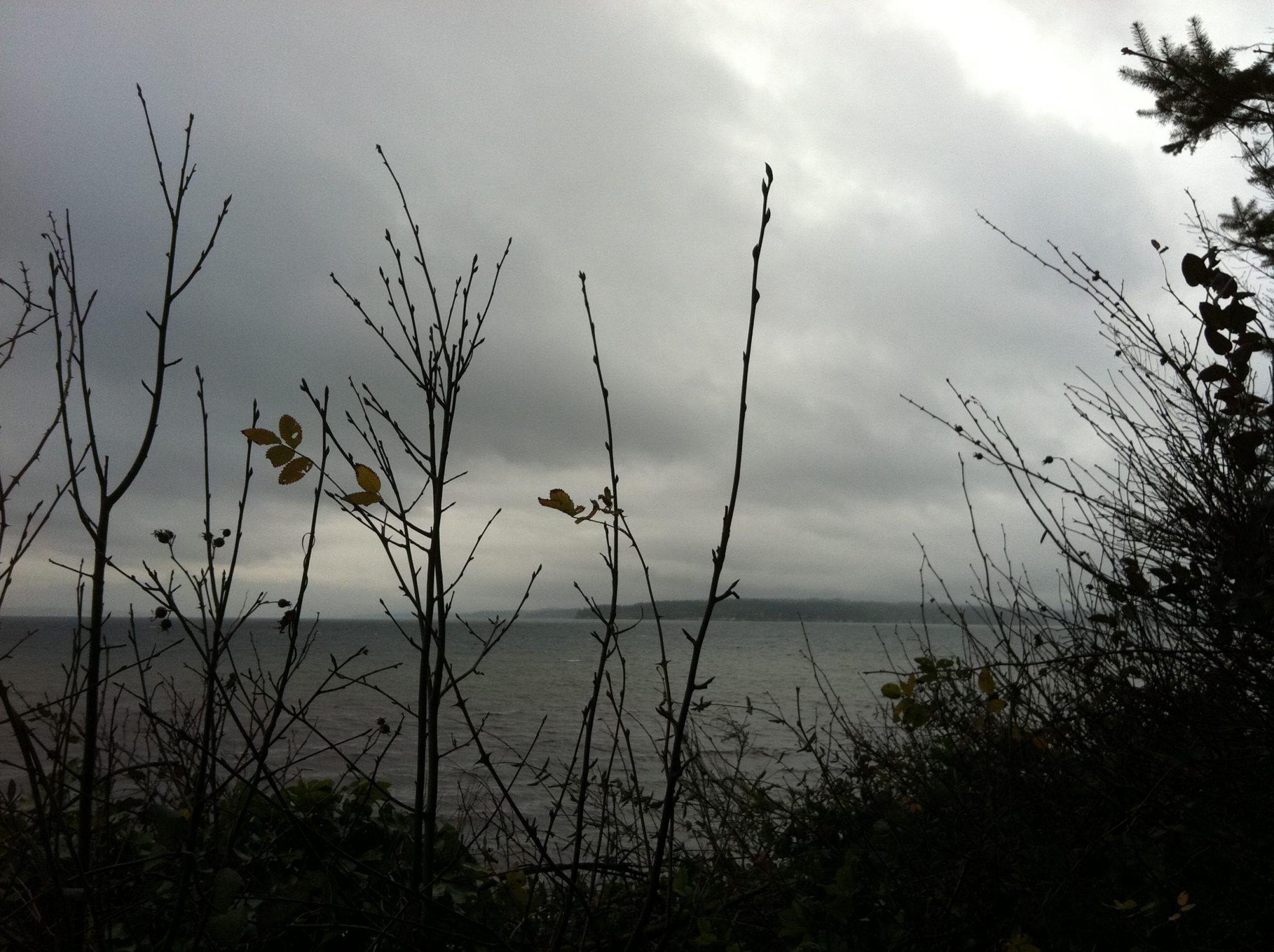 dark sky and twigs