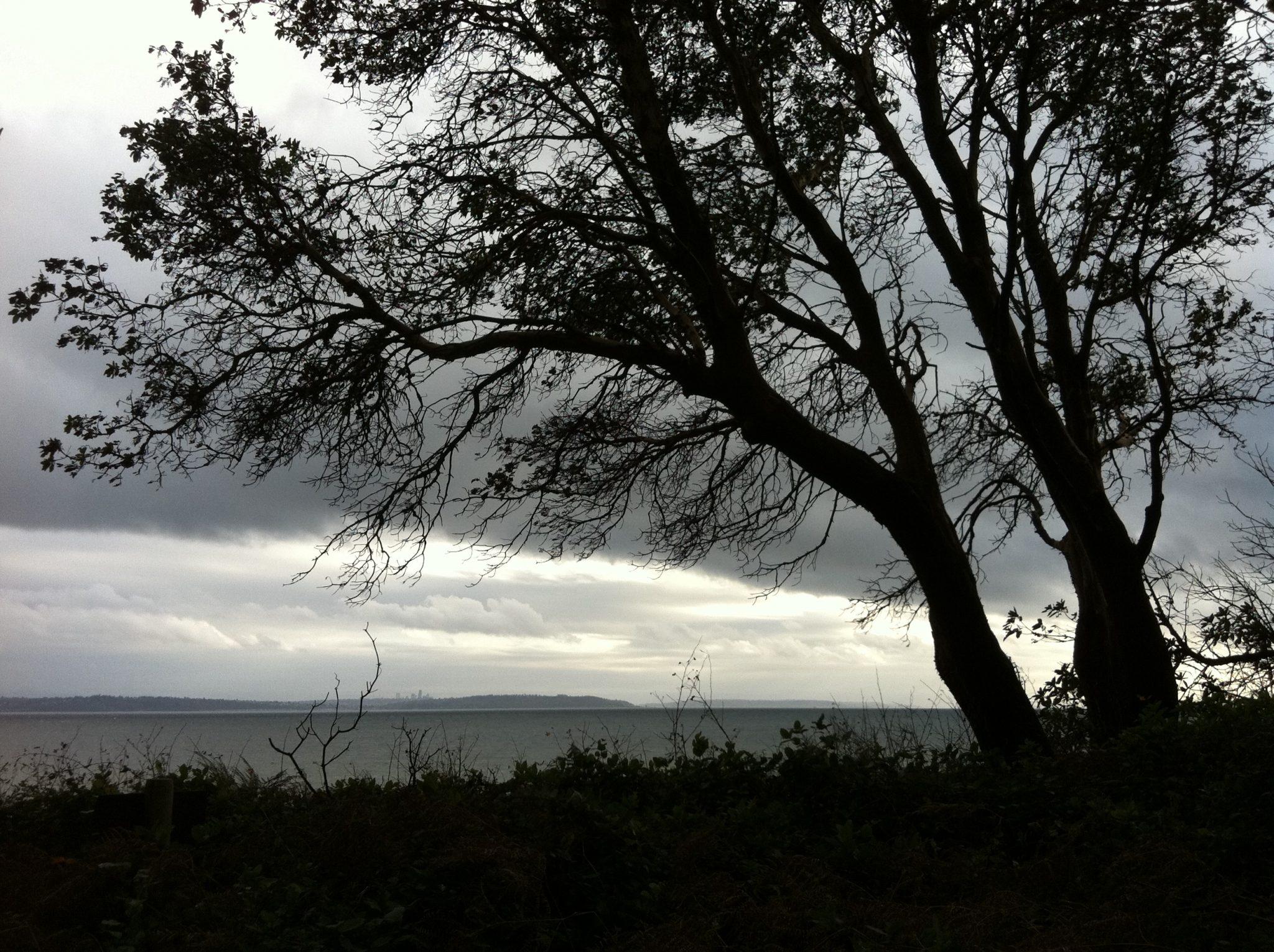 dark tree and sky