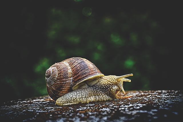 snail-caracol-redactor-traductor-corrector