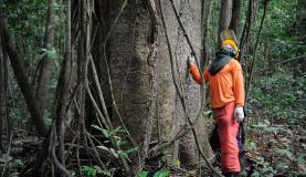 manejo florestal (1)