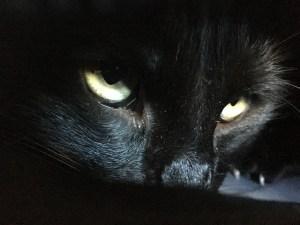 El gato negro resumen