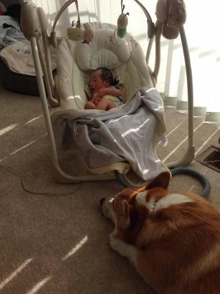 wilbur cane che fa la guardia alla neonata