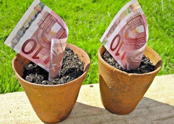 Vasi con dentro piantati 10 euro