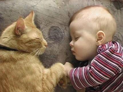 gatto e bimbo