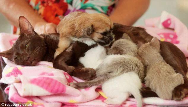 cuccioli e Hope