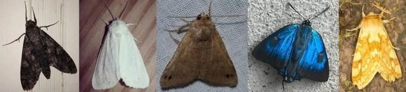 Cores das Mariposas 1024x233 - A Simbologia Das Mariposas