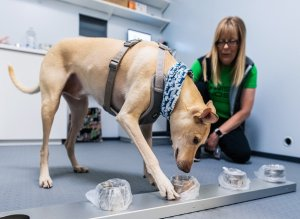 Wise Nose: The Rise of Covid-19 Sniffer Dogs, Adorable Video of Sniffer Dogs