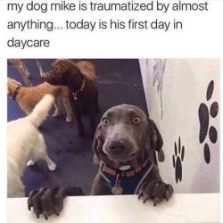 Unkleaboki Funny Dog Video, Funny Dog Memes, Sept 11
