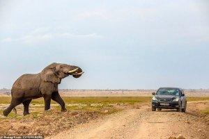 Escape of a lifetime: Angry Elephant Chases Campers in Kenya (Dramatic Photos)