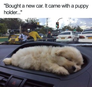 Adorable Dog Memes and Funny Cat PicturesThat Will Make Your Day (Thursday morning funny memes). 15 Funny Animal Photos