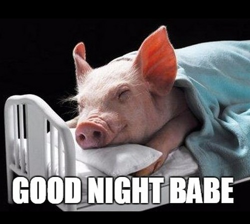 Good Night Memes for Him: Unkleaboki Funny memes night, Dank memes, funny animal pictures and Adult Jokes