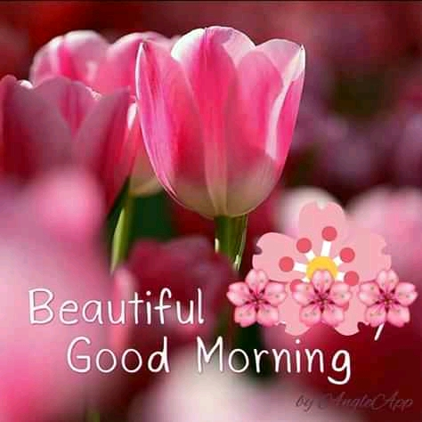 Good Morning happy wednesday (18 Good Morning Quotes for Her)