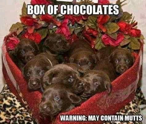30 Valentine's Day gifts (Funny Valentine Day Memes)
