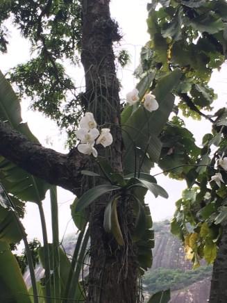 Orchideen an Bäumen