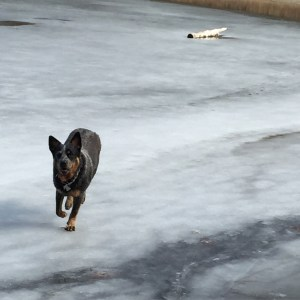 When the lake freezes you can run on it!